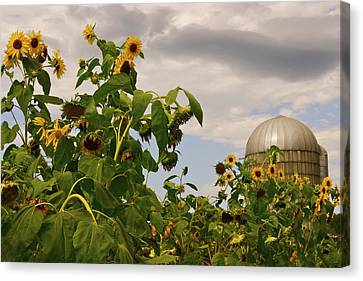Canvas Print featuring the photograph Minot Farm by Alice Mainville