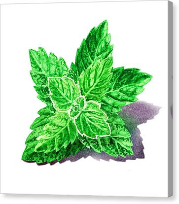 Mint Leaves Canvas Print by Irina Sztukowski