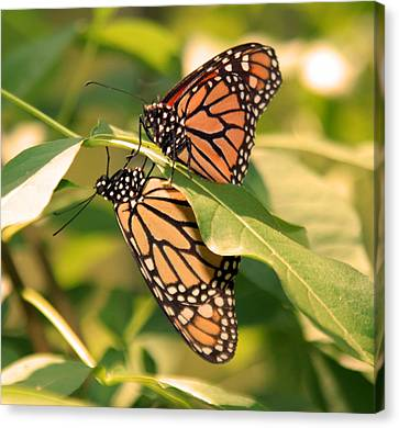 Canvas Print featuring the photograph Mirror Image by Karen Silvestri