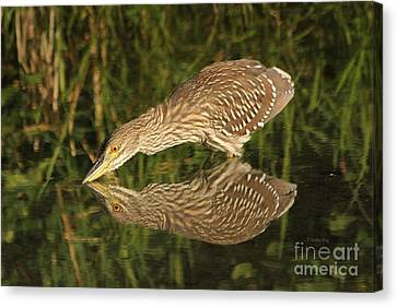 Mirror Mirror On The Wall Who Is The Fairest Heron Of All Canvas Print by Heather King