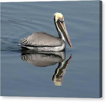 Mirror Pelican Canvas Print