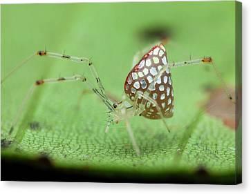 Mirror Spider Canvas Print