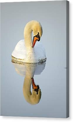 Mirroring Swan Canvas Print by Andy-Kim Moeller