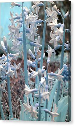 Canvas Print featuring the photograph Misc. Infrared by Rebecca Parker