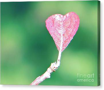 Canvas Print featuring the photograph Miss Lonely Heart by Joy Hardee