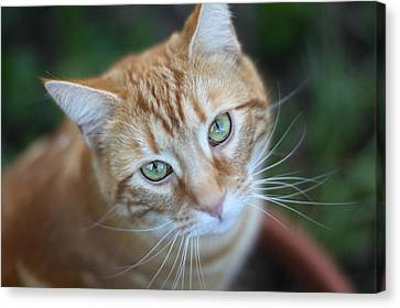 Miss Lucy Mcgillicuddy Canvas Print by Melanie Lankford Photography