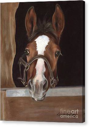 Bay Horse Canvas Print - Miss Me by Linda Shantz