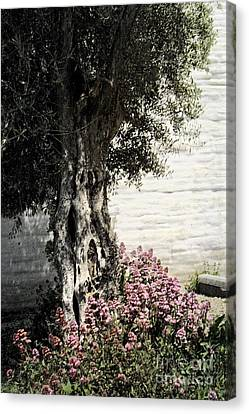 Canvas Print featuring the photograph Mission San Jose Tree Dedicated To The Ohlones by Ellen Cotton