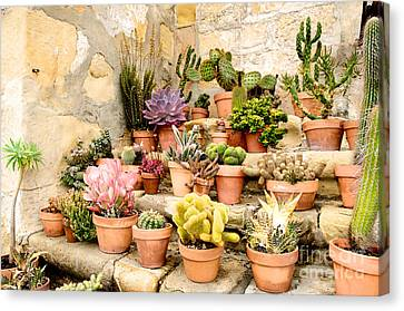 Canvas Print featuring the photograph Mission Succulents by Vinnie Oakes