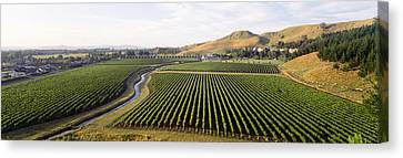 Mission Vineyard, Hawkes Bay North Canvas Print by Panoramic Images