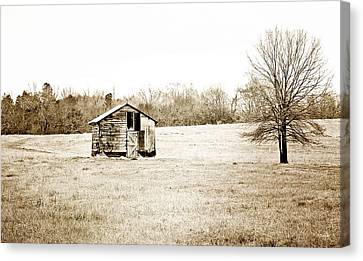 Mississippi Pasture Canvas Print by Scott Pellegrin