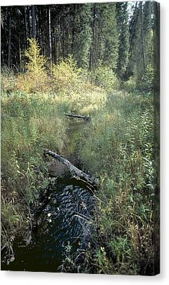 Mississippi River Headwaters Canvas Print by Garry McMichael