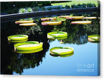 Missouri Botanical Garden Giant Lily Pads Canvas Print by Luther Fine Art