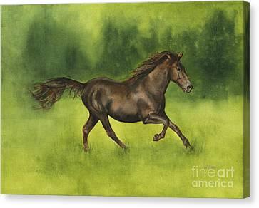Missouri Fox Trotter Horse Canvas Print by Nan Wright
