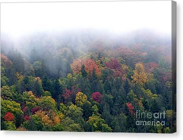 Mist And Fall Color Canvas Print by Thomas R Fletcher