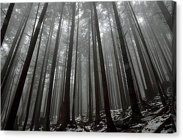 Mist In The Woods Canvas Print by Kathy King