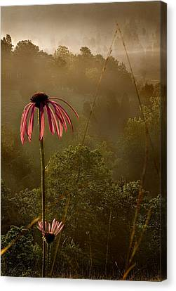 Mist On The Glade Canvas Print by Robert Charity
