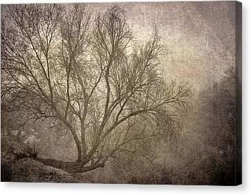 Mist Tree Canvas Print by Guido Montanes Castillo