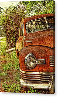 Mister Brown Canvas Print by Toni Hopper