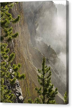 Misty Canyon  Canvas Print
