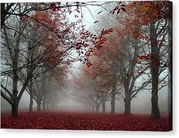 Misty Chestnut Grove Canvas Print