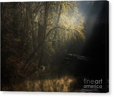 Canvas Print featuring the photograph Misty Creek by Inge Riis McDonald