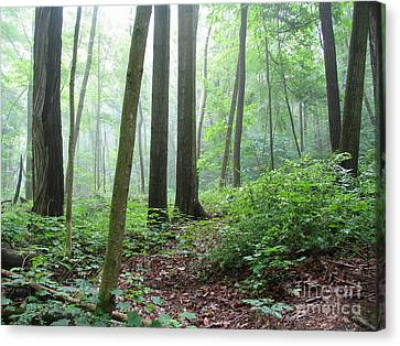 Misty Deep Forest Canvas Print by Kathi Mirto