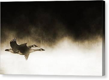 Misty Flight Canvas Print by Tim Gainey