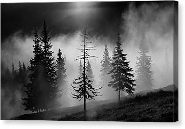 Romania Canvas Print - Misty Forest by Julien Oncete