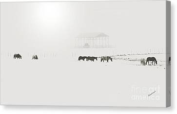 Foggy  Morn Canvas Print