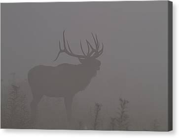 Misty Morning Bull Elk Canvas Print