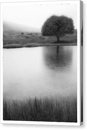 Misty Morning By The Pond Canvas Print by Cristel Mol-Dellepoort