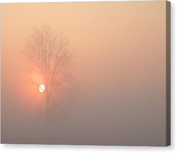 Misty Morning Canvas Print by Carlee Ojeda