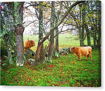 Misty Morning Conversation Canvas Print by Joy Nichols