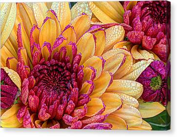 Close Focus Floral Canvas Print - Misty Morning Dew  by Heidi Smith