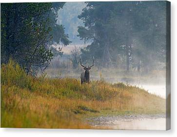 Misty Morning Elk Canvas Print