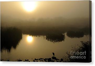 Misty Morning In The Marsh Canvas Print by Nancy Greenland