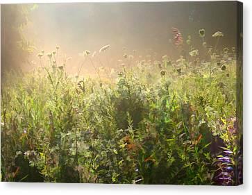 Misty Morning Canvas Print by John Robichaud
