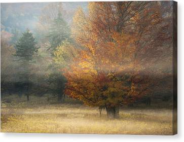 Misty Morning Maple Canvas Print by Joseph Rossbach