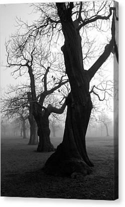 Misty Morning Canvas Print by Mark Rogan