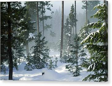 Misty Morning Snow Canvas Print by Annie Pflueger