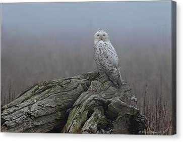 Canvas Print featuring the photograph Misty Morning Snowy Owl by Daniel Behm