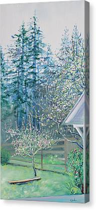 Misty Morning With Apple Blossoms And Redwoods Canvas Print by Asha Carolyn Young