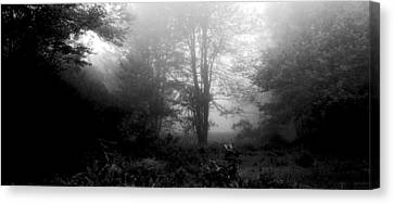 Misty Morning With Tree Silhouettes Canvas Print