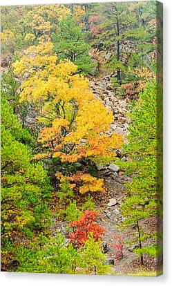 Misty Mountain Tree - Talimena Scenic Byway - Arkansas To Oklahoma Canvas Print by Silvio Ligutti