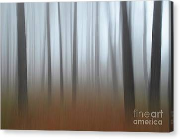 Canvas Print featuring the photograph Misty Thoughts by Simona Ghidini