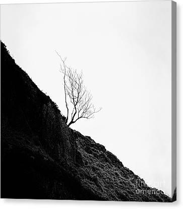 Misty Tree Glen Etive Canvas Print by John Farnan