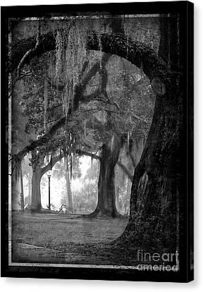 Misty Walk Through The Oak Trees Canvas Print by Jeanne  Woods