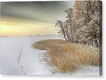 Misty Winter Morning Canvas Print by Keijo Savolainen