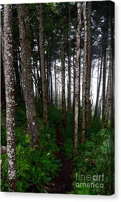 Misty Woods At Mt. Mitchell Canvas Print by Deborah Scannell